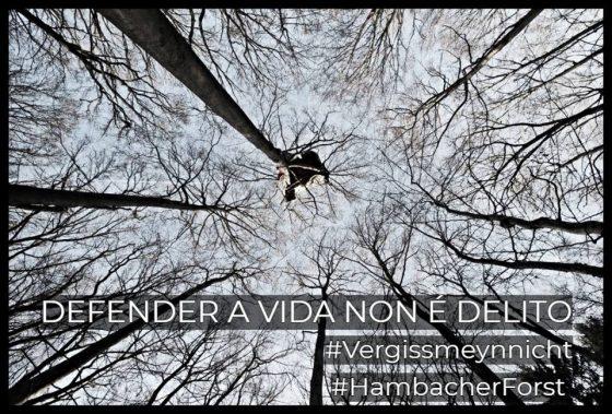O BOSQUE DE HAMBACH, EXEMPLO DE RESISTENCIA CLIMÁTICA