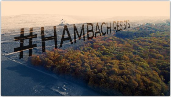 SUSPENSION OF FELLING IN HAMBACH FOREST