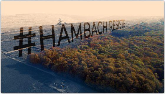 SUSPENSIÓN DE LA TALA DEL BOSQUE DE HAMBACH