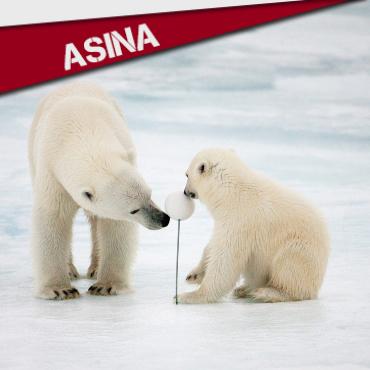 ASINA : SALVEMOS O ÁRTICO!